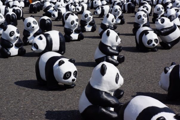 A closer look at the pandas.