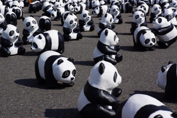 A closer look at the pandas.