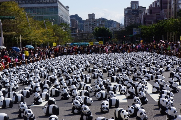 Pandas as far as the eye can see.