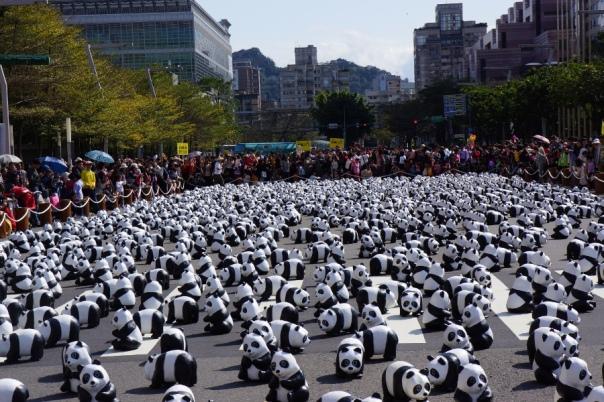 Pandas as far as the eye can see.