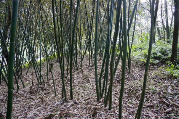 Bamboo means you're in a quiet place.
