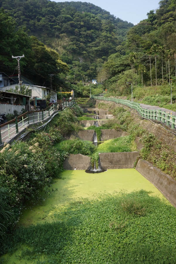 A lot of vegetation and algae cover the stream leading to Guizikeng 貴子坑