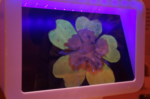 You can see like a bee in this part of the exhibit.  Bees can detect which parts of the flower have pollen.