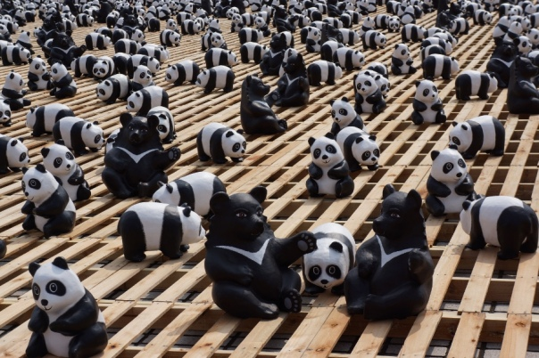 Black bears are scattered among the pandas.