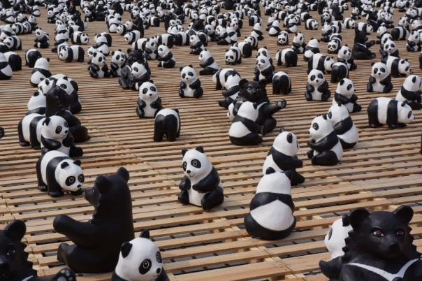 The pandas are more spread out than at the Taipei City Hall exhibit.