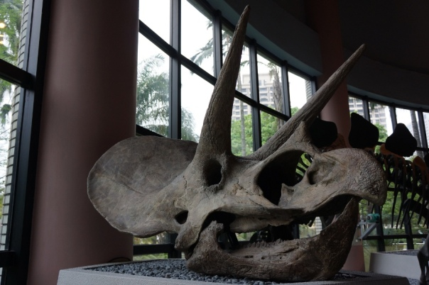 There are more dinosaurs than you can count at the National Museum of Natural Science 國立自然科學博物館 in Taichung.