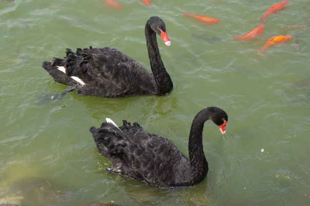 Some creepy black swans guard the castle.