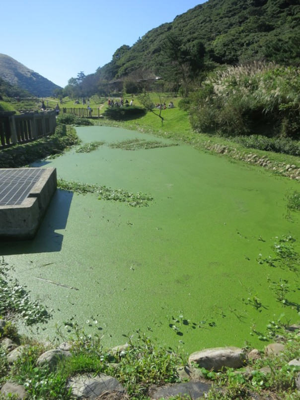 The ponds aren't always this green.