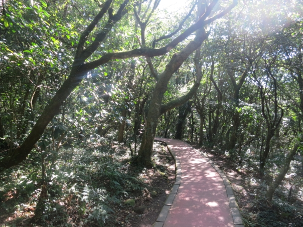 The trail heading to the meadow is very simple.