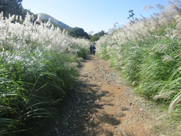 The winding trail behind the meadow is lined by tall silver grass.