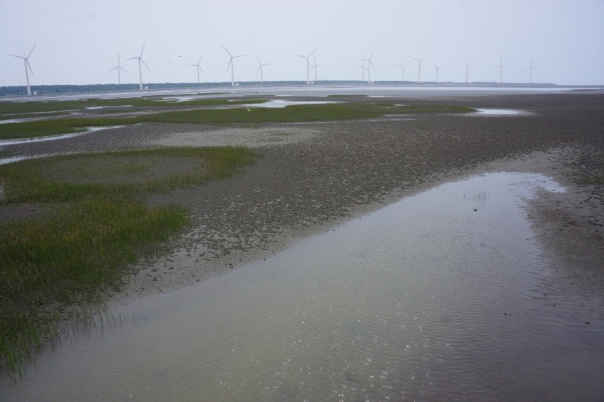 There are seemingly dozens of windmills boarding the wetlands.