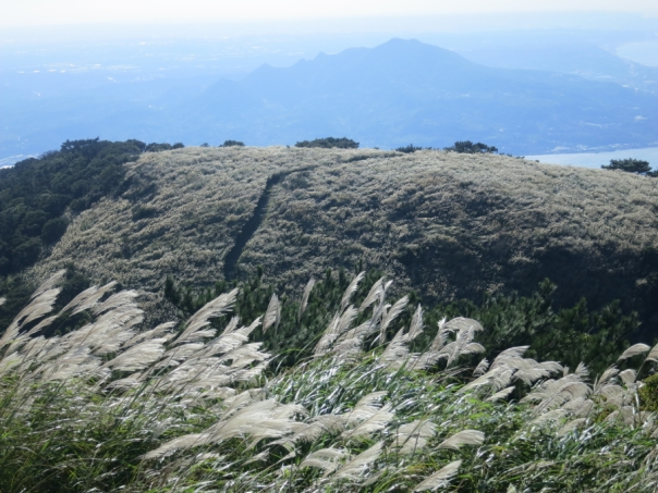Mt. Miantian 面天山 is a great place to see silver grass, mountains, and even the sea!